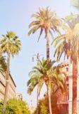 Drzewka palmowego lata tło Obrazy Royalty Free