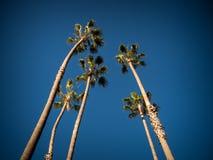 Drzewka palmowego niebo Obraz Stock