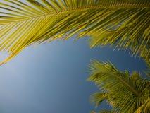 Drzewka palmowego otokowy niebieskie niebo zdjęcie stock