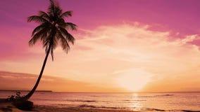 Drzewka palmowego seashore krajobraz Pomarańczowy zmierzch nad denną wyspy plażą zbiory wideo