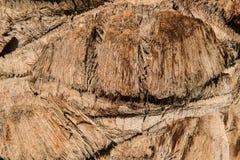 Drzewka palmowego tła zakończenie dni liści palm sunny zabrać Obraz Stock