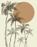 Drzewka palmowego tło ilustracja wektor