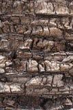 Drzewka palmowego tło Zdjęcia Stock