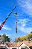 Drzewka Palmowego usunięcie Zdjęcia Royalty Free