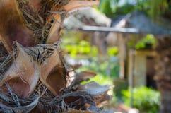 Drzewka palmowego zbliżenie na wakacje na słonecznym dniu fotografia royalty free
