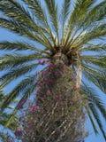 drzewko palmowe Zdjęcia Royalty Free