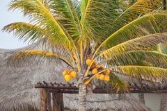 Drzewko palmowe Fotografia Stock