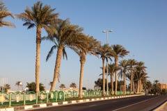 Drzewko Palmowe aleja w grodzkim Mezairaa, UAE Obrazy Royalty Free