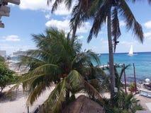 drzewko palmowe, arecales, kurort, zwrotniki, drzewo, karaibski, morze Obrazy Stock