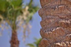 Drzewko palmowe barkentyna Zdjęcie Stock