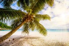 Drzewko palmowe, biały piasek, turkus woda przy tropikalną plażą, raj obrazy stock