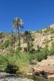 Drzewko palmowe blisko rzeki Obrazy Royalty Free