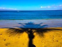 Drzewko Palmowe cień na piasku przy Niskim przypływem Fotografia Stock