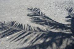 Drzewko palmowe ciskający cienie na drylują plażę zdjęcie royalty free