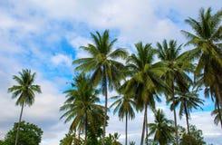 Drzewko palmowe gaj Słoneczny dzień na egzotycznej wyspie w Azja Coco drzewka palmowego korony na niebieskiego nieba tle i liść Fotografia Stock