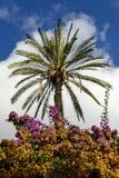 Drzewko palmowe i bougainvillea zdjęcia stock