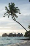 Drzewko palmowe i bungalowy w bor borach Fotografia Royalty Free