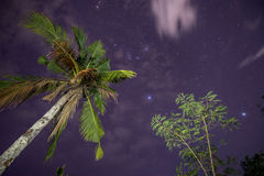 Drzewko palmowe i gwiaździsty niebo Zdjęcia Royalty Free