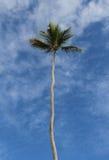 Drzewko palmowe i niebieskie niebo w republice dominikańskiej Zdjęcia Stock