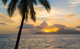 Drzewko palmowe i ocean z pięknym zmierzchem Zdjęcie Stock