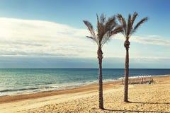 Drzewko palmowe i parasole w plaży Zdjęcia Royalty Free