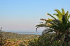 Drzewko palmowe i seascape Zdjęcie Stock