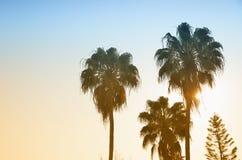 Drzewko palmowe i sunside Obraz Royalty Free