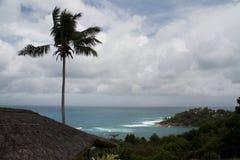 Drzewko palmowe i widok nad oceanem indyjskim Zdjęcia Royalty Free