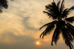 Drzewko Palmowe i zmierzch przy mrocznym czasem, sylwetka fotografia stock