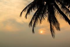 Drzewko Palmowe i zmierzch przy mrocznym czasem, sylwetka fotografia royalty free