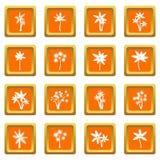 Drzewko palmowe ikona ustawiająca pomarańcze Zdjęcie Royalty Free