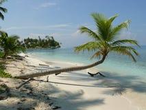 Drzewko Palmowe Karaiby Fotografia Stock