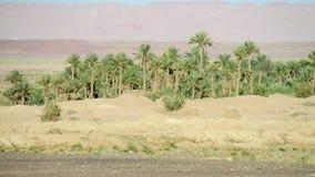 Drzewko palmowe las w pustyni Fotografia Stock