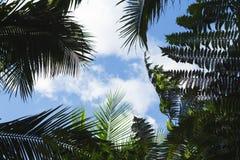 Drzewko palmowe liść na niebieskiego nieba tle Coco drzewka palmowego wierzchołka sylwetka na niebie Obrazy Stock