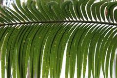 Drzewko palmowe liścia zbliżenia dzień obraz royalty free