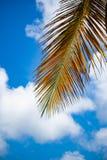 Drzewko palmowe liście zdjęcia royalty free