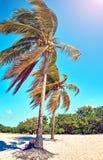 Drzewko palmowe liście przeciw tła nieba światła słonecznego rocznik tonujący karciany retro Obrazy Stock
