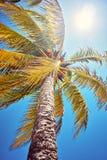 Drzewko palmowe liście przeciw tła nieba światła słonecznego rocznik tonujący karciany retro Fotografia Stock