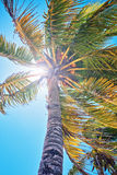 Drzewko palmowe liście przeciw tła nieba światła słonecznego rocznik tonujący karciany retro Zdjęcia Royalty Free
