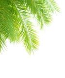 Drzewko palmowe liści granica Obrazy Stock
