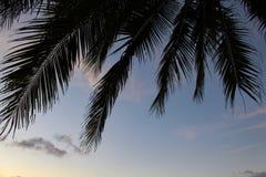 Drzewko palmowe liście i niebieskie niebo Obrazy Stock