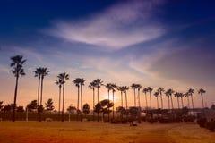 Drzewko palmowe linia Obraz Royalty Free