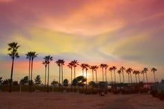 Drzewko palmowe linia Obrazy Stock