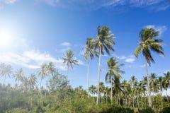 Drzewko palmowe linia horyzontu na tropikalnej wyspie Pogodny niebieskiego nieba tło Zdjęcia Royalty Free