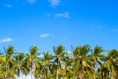 Drzewko palmowe linia na tropikalnej wyspie tła niebo błękitny jaskrawy Obrazy Royalty Free
