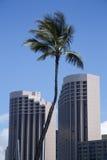 Drzewko Palmowe między podpórkami Obrazy Stock