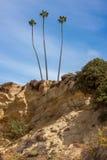 Drzewko Palmowe na falezie Obrazy Royalty Free