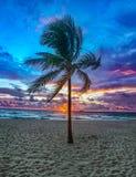 Drzewko Palmowe na fort lauderdale plaży, Floryda, usa przy wschodem słońca obrazy stock