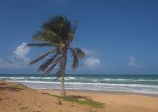 Drzewko palmowe na Karon plaży Obrazy Royalty Free