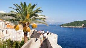 Drzewko palmowe na miasto ścianach Dubrovnik fotografia stock